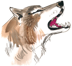 Illustration of wolf. Author Ludvík Kunc